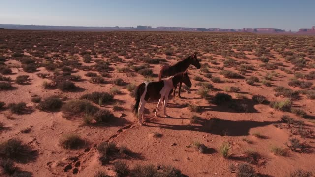 right to left orbit pull away wild horses, drone aerial 4k, monument valley, valley of the gods, desert, cowboy, desolate, mustang, range, utah, nevada, arizona, gallup, paint horse .mov - paint horse stock videos & royalty-free footage