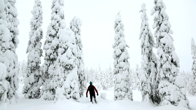 vídeos de stock, filmes e b-roll de riisitunturi np male walker spruces covered with tykky lapland finland - peter snow
