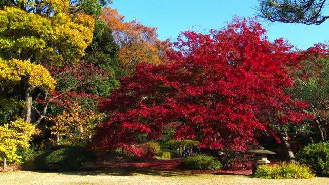 rikugien gardens autumn pan - 整形式庭園点の映像素材/bロール