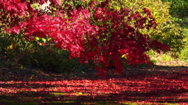 rikugien gardens autumn - 整形式庭園点の映像素材/bロール