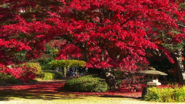 rikugien gardens autumn - formal garden点の映像素材/bロール