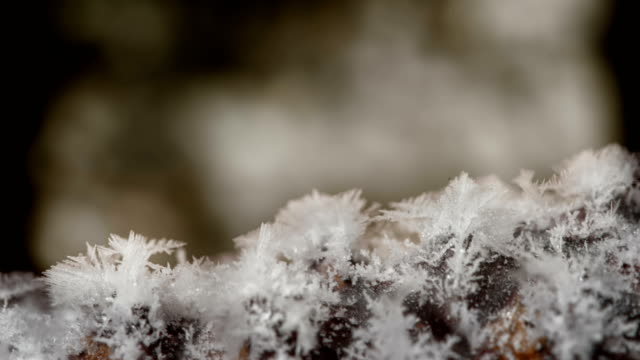 rime on a pine cone - eingefroren stock-videos und b-roll-filmmaterial