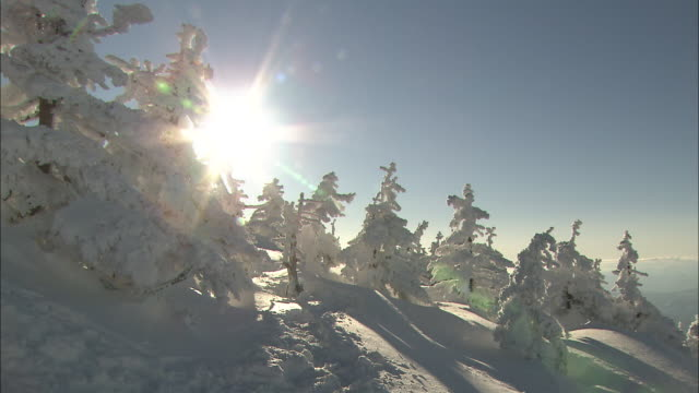 rime-coated trees at zao lit up by the sun - ski slope stock videos and b-roll footage