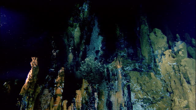 rimicaris shrimps on black smoker deep sea vent, mid atlantic ridge - rock formation stock videos & royalty-free footage