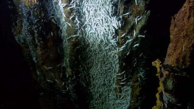 rimicaris shrimps on black smoker deep sea vent, mid atlantic ridge - deep stock videos & royalty-free footage