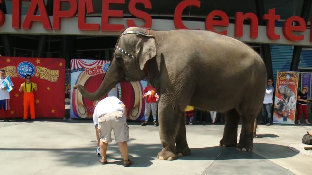 ringling bros elephant predicts fifa world cup winner at staples center on july 09 2014 in los angeles california - world championship stock videos & royalty-free footage