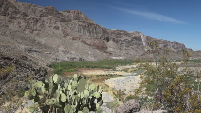 rio grande - cactus stock videos & royalty-free footage