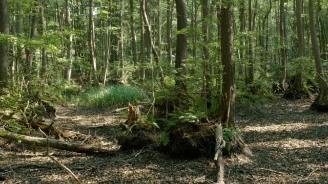 riparian forest in summer - ausgedörrt stock-videos und b-roll-filmmaterial
