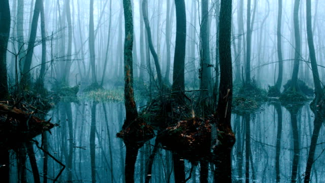 Riparian forest in winter
