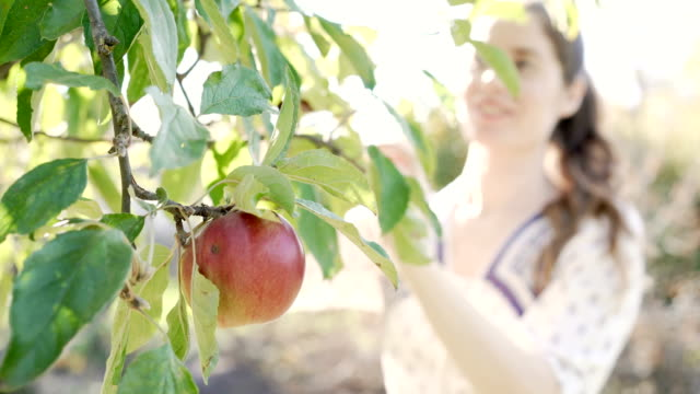ripe and ready to pick - apple fruit stock videos & royalty-free footage
