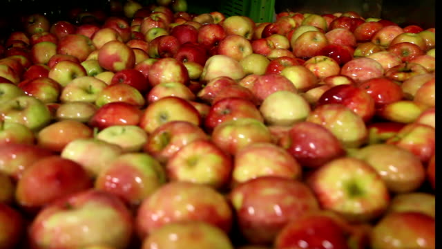 ripe apples being processed and transported for packing - quality control stock videos & royalty-free footage