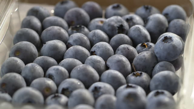 ripe blueberry crop, uk - fade in stock videos & royalty-free footage