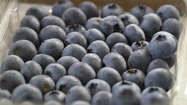 ripe blueberry crop, uk - carton stock videos & royalty-free footage