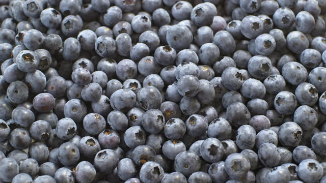 vídeos de stock e filmes b-roll de ripe blueberry crop, uk - maduro
