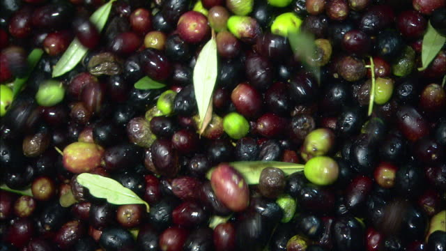 ripe olives - olive oil stock videos & royalty-free footage