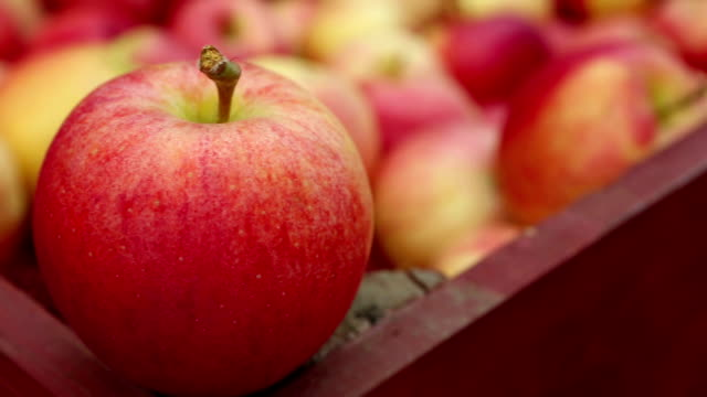 ripe organic gala apples - ripe stock videos & royalty-free footage