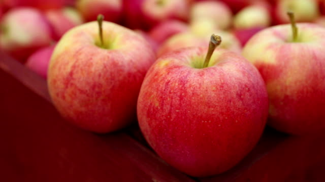 ripe organic gala apples - gala stock videos and b-roll footage