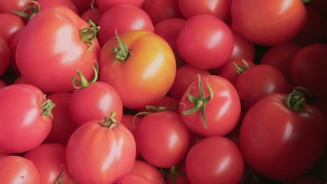 cu ripe tomatoes - 豊富点の映像素材/bロール