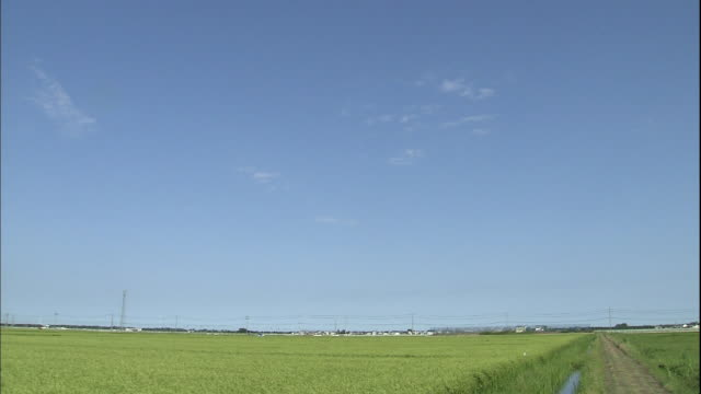 ripening stalks of rice undulate in a breeze. - ケーブル線点の映像素材/bロール