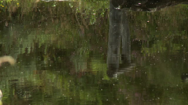 ripples and reflection in water - pollen stock videos & royalty-free footage