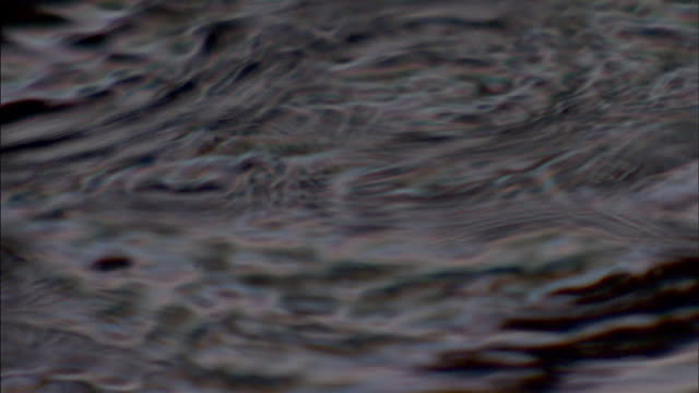 Ripples radiate in a puddle as raindrops fall.
