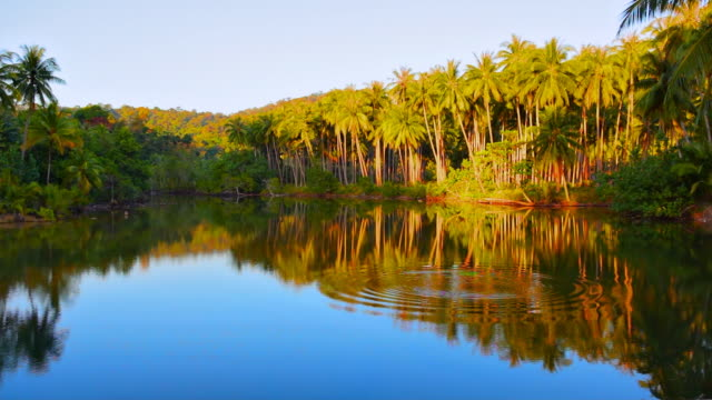 Ripples water in tropical forest
