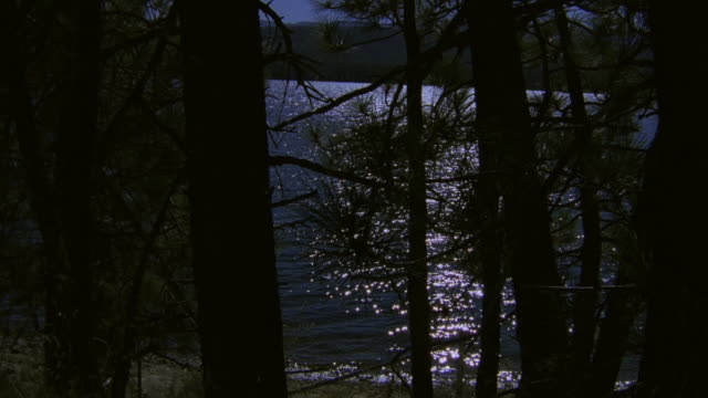 WS Rippling lake water glistening in moonlight through shoreline pines