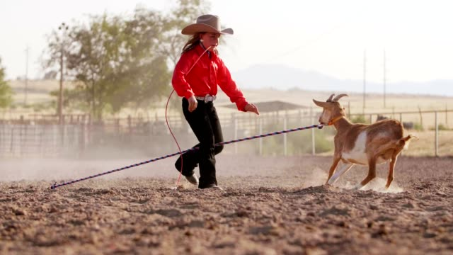 rirl rodeo goat tying - rodeo stock videos & royalty-free footage