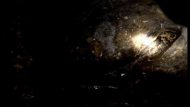 rise in size and number of rats int radu asavei searching cellar with hand torch for evidence of rats radu asavei interview sot a kilo of rubbish... - skadedjursangrepp bildbanksvideor och videomaterial från bakom kulisserna