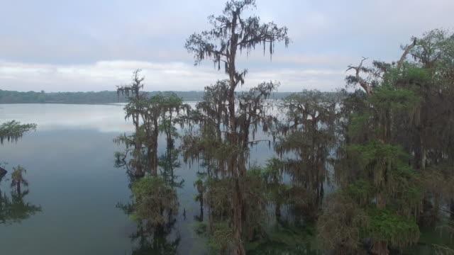 rise of cypress tree in swamp - drone aerial 4k everglades, swamp bayou with wildlife alligator nesting ibis, anhinga, cormorant, snowy egret, spoonbill, blue heron, eagle, hawk, cypress tree 4k transportation - bayou lafourche stock-videos und b-roll-filmmaterial