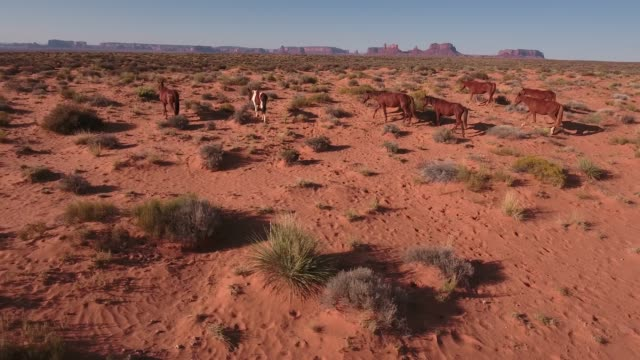 rise tracking med of wild horses, drone aerial 4k, monument valley, valley of the gods, desert, cowboy, desolate, mustang, range, utah, nevada, arizona, gallup, paint horse .mov - paint horse stock videos & royalty-free footage
