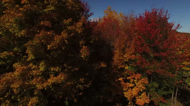 Rising Above The New England Foliage