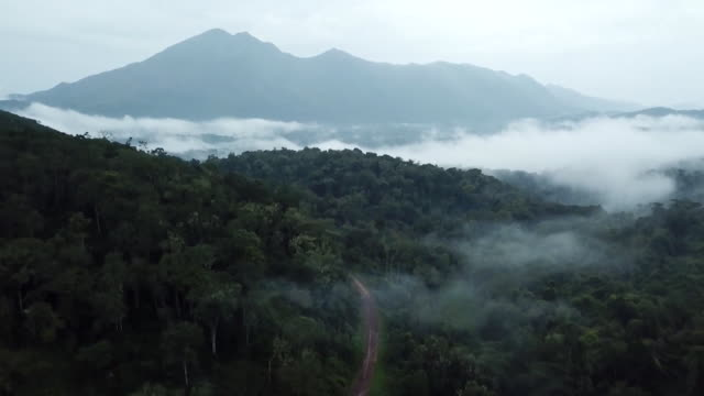 rising aerial shot of the congo rainforest - tropical rainforest stock videos & royalty-free footage