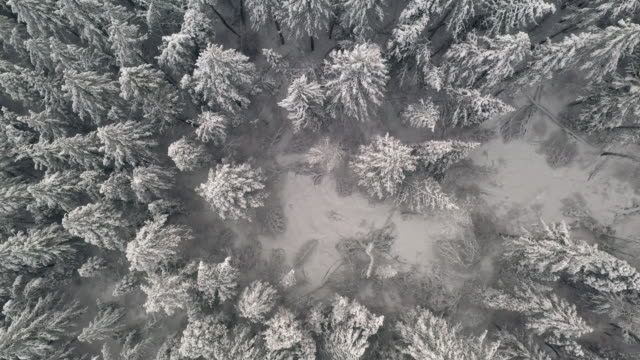Rising aerial view spinning above snow covered pine tree forest