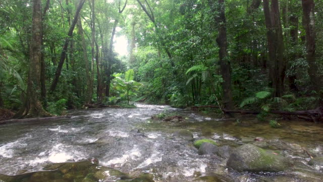 rising from behind a tree - rainforest stock videos & royalty-free footage