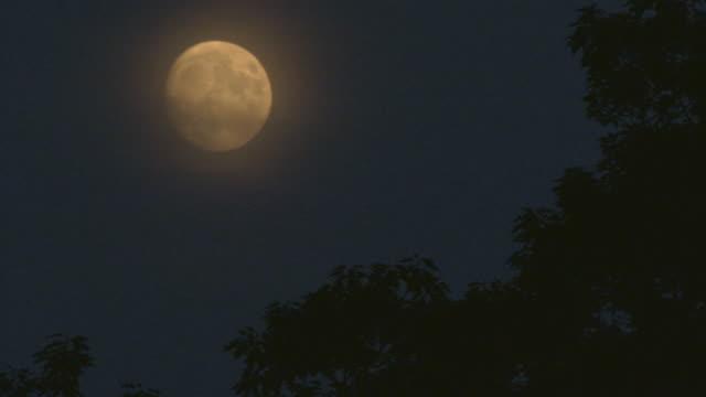 Rising full moon in a navy sky