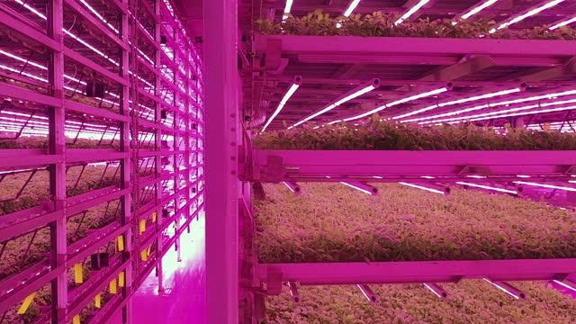 vídeos y material grabado en eventos de stock de perspectiva creciente de las hierbas que crecen en la granja vertical - hidropónica