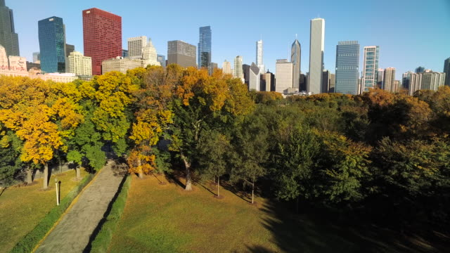 rising shot from grant park over autumn trees toward chicago skyscrapers - グラントパーク点の映像素材/bロール