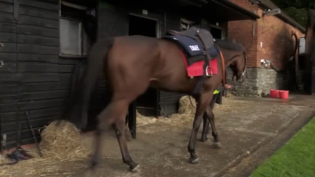rising star bryony frost believes it is only a matter of time before there is a female champion jump jockey frost became the second lady following... - cheltenham stock videos & royalty-free footage