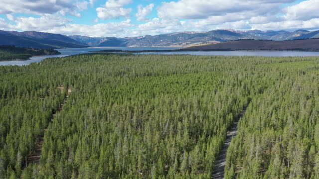 vídeos de stock e filmes b-roll de rising view over pine tree forest in montana view hebgen lake - pinhal