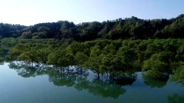 Rising water levels in the reservoir created by the Shirakawa Dam here created the startling sight of a flooded forest Morning fog May 11 added a...