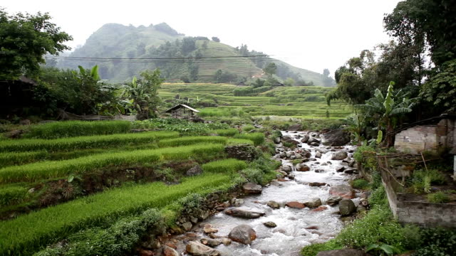 river among ricefields in sa pa, vietnam - sa pa stock videos and b-roll footage