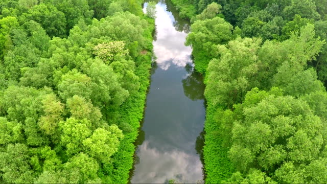 River and forest - Stock Footage (aerial)