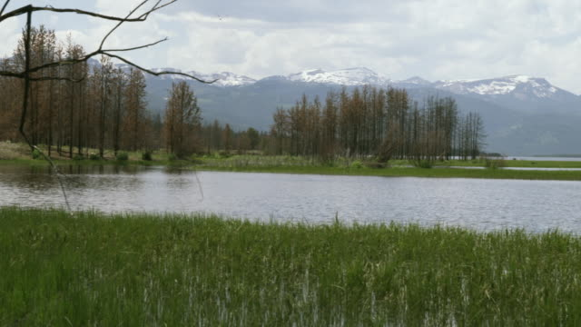 ws pan river and grass with mountains in background / yellowstone, wyoming, usa - alm stock-videos und b-roll-filmmaterial