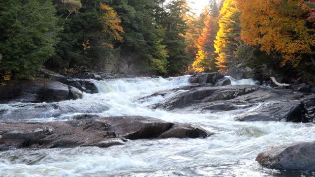 river and waterfall forest nature landscape in autumn, quebec, canada - autumn stock videos & royalty-free footage
