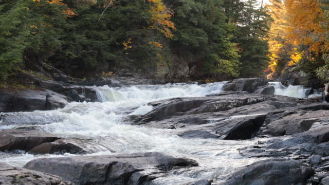 river and waterfall forest nature landscape in autumn, quebec, canada - rapid stock videos & royalty-free footage