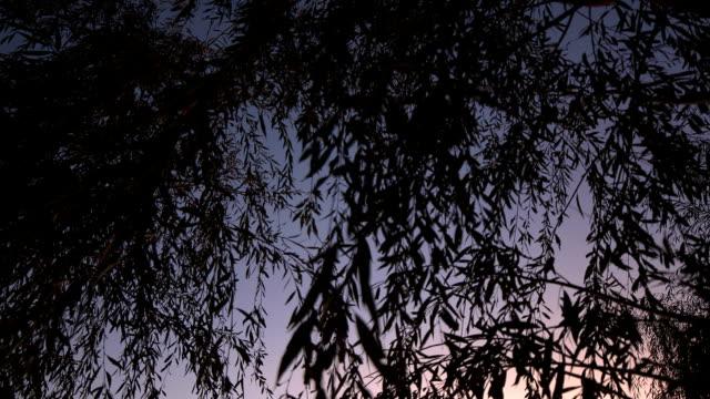 River in der Abenddämmerung