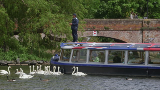 river avon - william shakespeare stock videos and b-roll footage