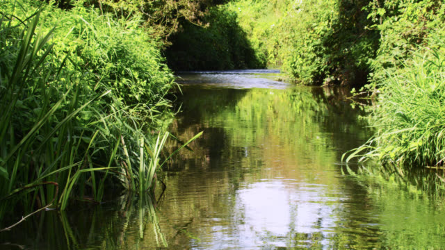 river banks and gently flowing river, nottinghamshire, england - nottinghamshire stock videos & royalty-free footage