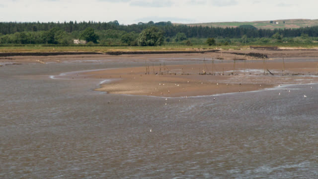 river estuary at low tide - galloway scotland stock videos & royalty-free footage